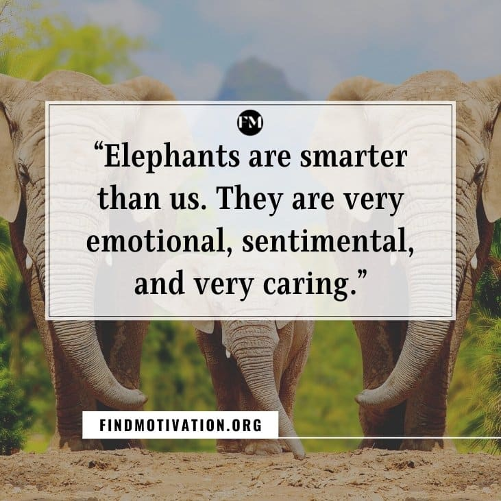 Inspiring dialogues and quotes from the movie Haathi Mere Saathi to know the importance of jungle